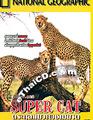 Super Cat [ DVD ]