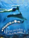 Eye of the Dolphin [ DVD ]